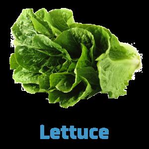 lettuce-farmermarket