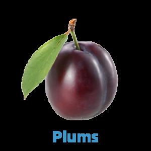 plums - farmers market