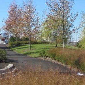 Ivy Hill Park
