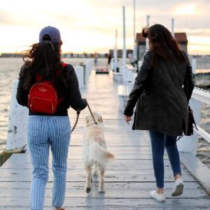 Dog-Friendly Newport RI   Find Pet-Friendly Hotels, Beaches
