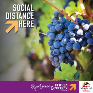 Social Distance Here - Vineyards