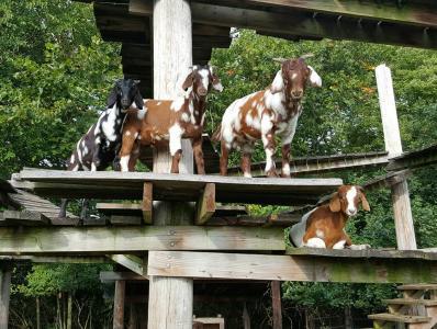 The Goat Boardwalk