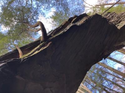Split Bow Arch by Sara Beth Gregory