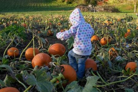Nehemiah Ranch pumpkin patch (Photo courtesy of the Nehemiah Ranch Facebook page)