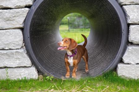 Dog at Brownsburg's Cardinal Bark Park (Photo courtesy of Brownsburg Parks on Instagram)
