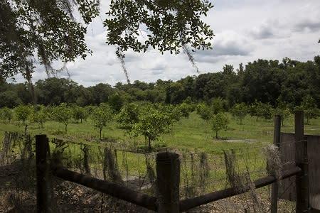 Groves at English Lake Farm