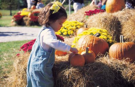Fabulous Fall Festivities