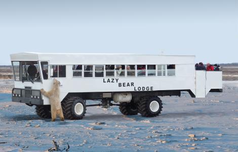 Lazy Bear Lodge Polar Bear Adventure