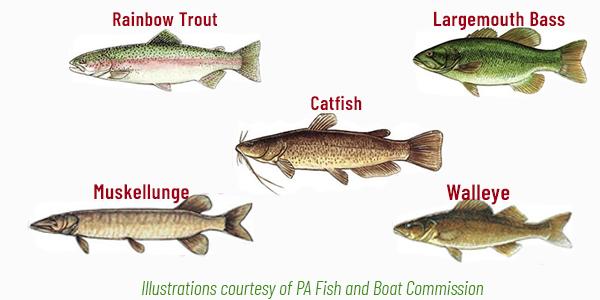 Little Buffalo State Park Fish Species Adventure Trail