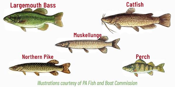 Memorial Lake Fish Species Adventure Trail