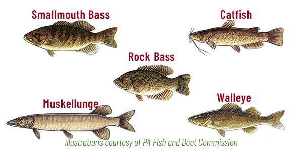 The Susquehanna River Fish Species Adventure Trail