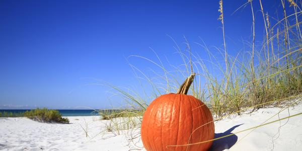 beach pumpkin