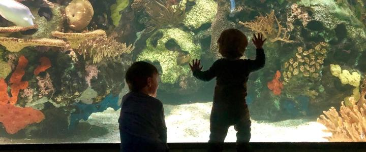 Top 10 Things To Do With Kids In The Myrtle Beach Area