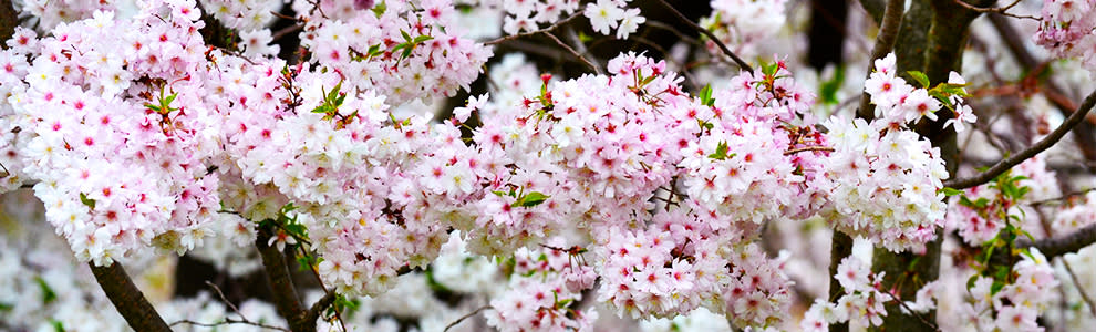 Newark Blossoms 8 Miles from New York City