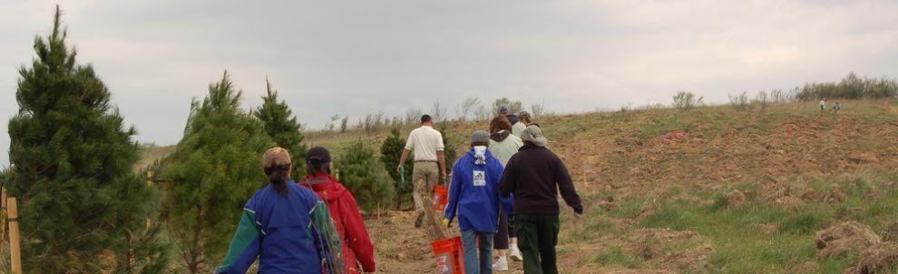 Plant a Tree at Flight 93