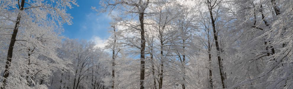 Forbes State Forest Winter