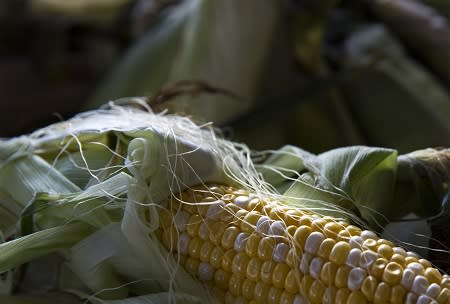 Ear of corn from K&J Homegrown Produce