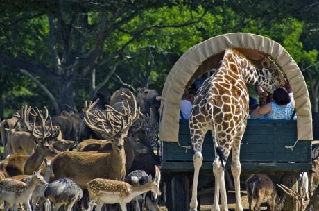 2 Get a kiss from a giraffe at Global Widlife Center in Folsom