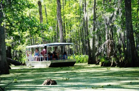 Slidell Things to Do - Honey island swamp tour