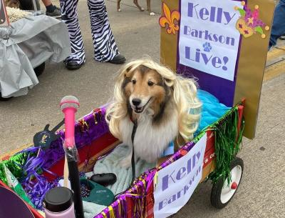 dog at Krewe of Barkus dressed as Kelly Clarkson