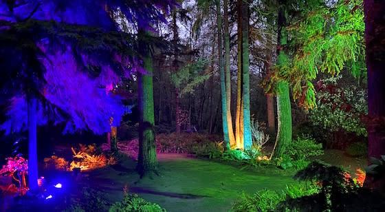 winter glow lights on trees