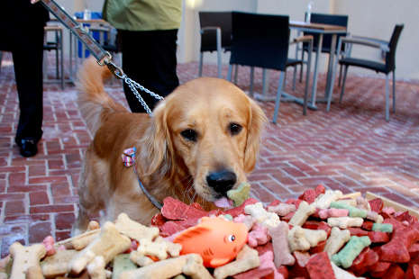 Pet-Friendly Things to Do in Alexandria