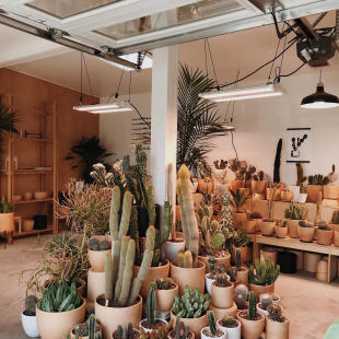 High & Dry Cactus Co