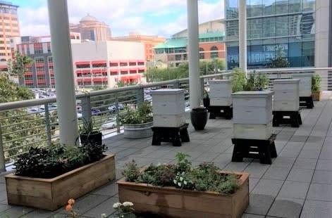 GRB bee balcony