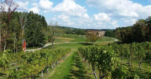 Bella Cloiche Vineyard