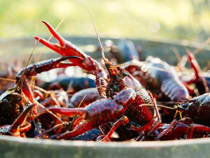 The Connoisseur's Crawfish