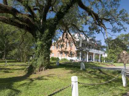 Evangeline - Oak Tree, St. Martinville, Louisiana