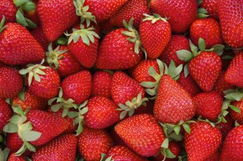Strawberry Season is Upon Us