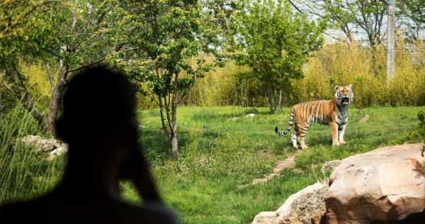 Slawson Family Tiger Trek at Sedgwick County Zoo