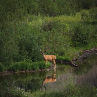 5 Reasons to bring your Big Game Hunt to Durango