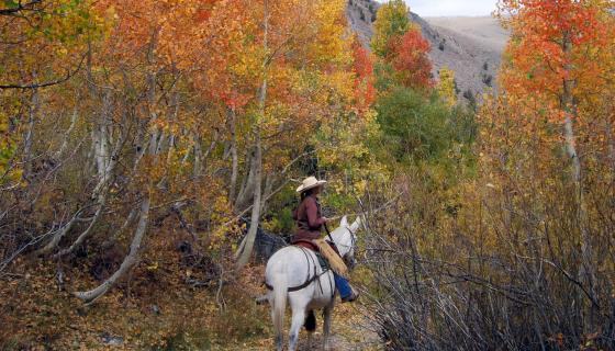 Cropped McGee Pack Station Horseback Fall Colors