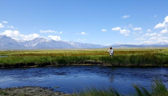Fly fishing Owens River