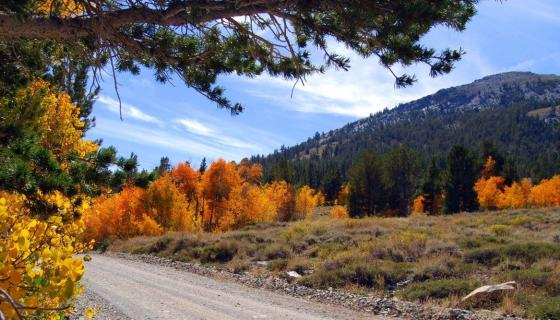 Green Creek Road