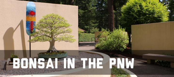 The Pacific Northwest A Hotbed Of American Bonsai