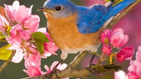 Birding in New York