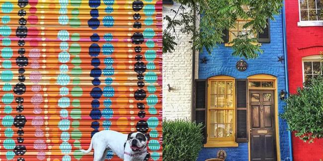 A Dog Posing In Front of a Mural in Alexandria, VA