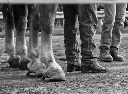 North Salem Old Fashion Days horse pull