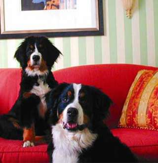 Dogs at Hotel Monaco