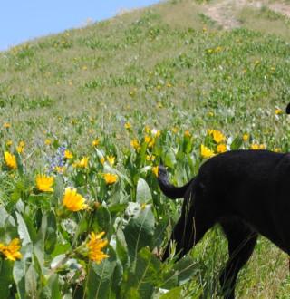 Dog on Hiking Trail Above Salt Lake