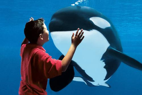 Child and Orca Whale at SeaWorld San Diego