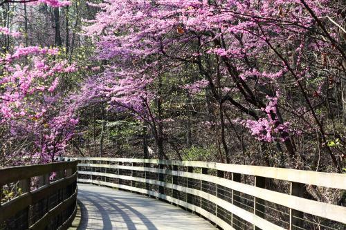 Saunders Monticello Trail