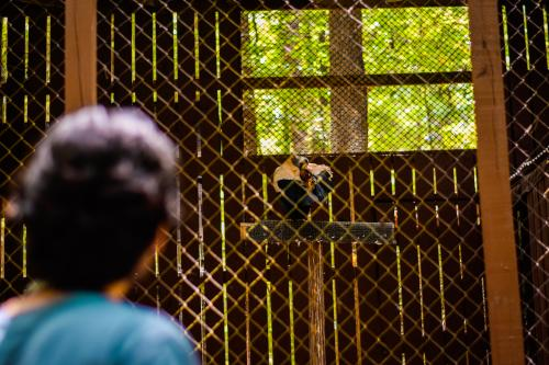 A guest watches a vulture preen its feathers at the Carolina Raptor Center.