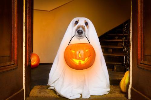 Halloween Dog via nypost.com
