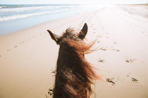 Equine Adventures - horseback beach riding