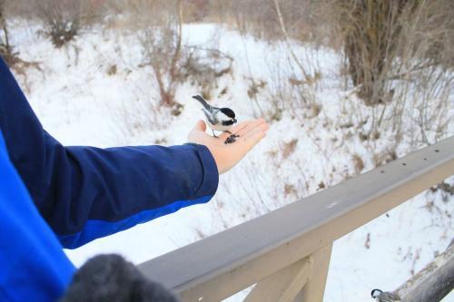 Chickadee at Beaver Creek