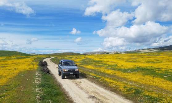 Driving through a wildflower super bloom in Carrizo Plains